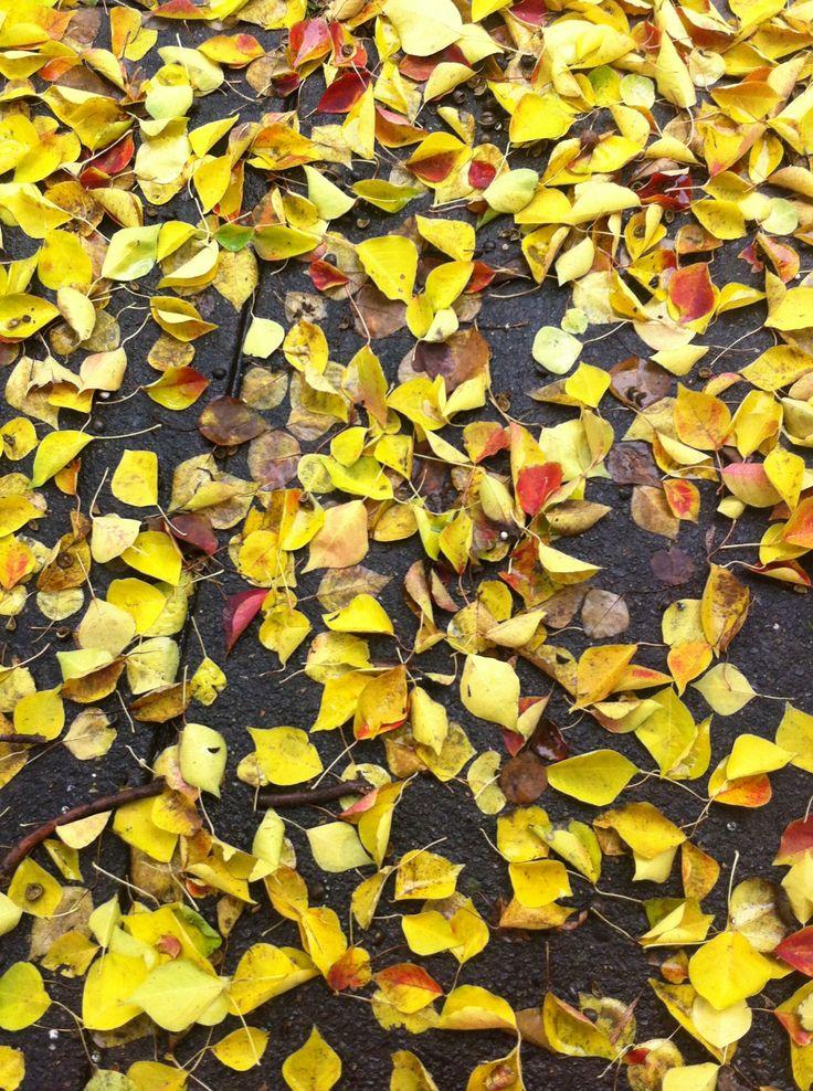 Yep leaves again