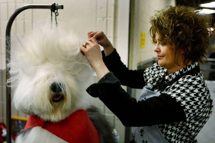86 best pet grooming images on pinterest grooming dogs cat kennel dog groomingg 30002000 solutioingenieria Gallery