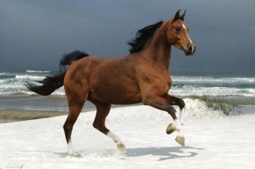 13 sch ne pferde in der wilden natur pferde hintergrundbilder sch ne pferde und pferde