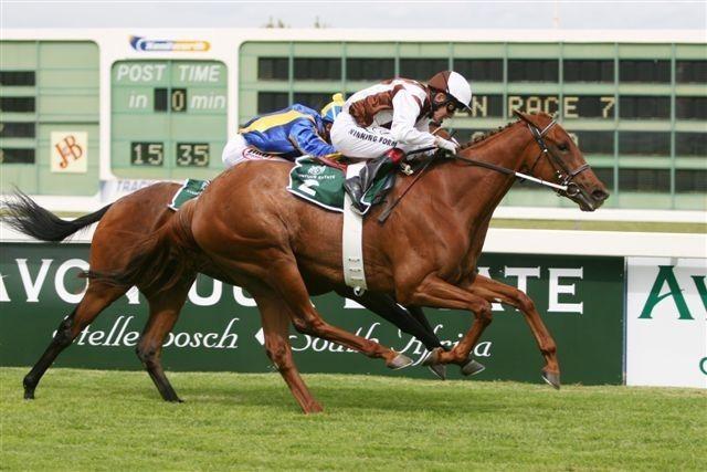 SUN CLASSIQUE ch m 2003 FUJI KISEKI (JPN) – ELFENJER (AUS) Won: Woolavington 2200 (Gr.1) 2200m Won: Cape Fillies Guineas (Gr.1) 1600m Won: Majorca Stakes (Gr.1) 1600m Won: Diana Stakes (Gr.3) 1400m
