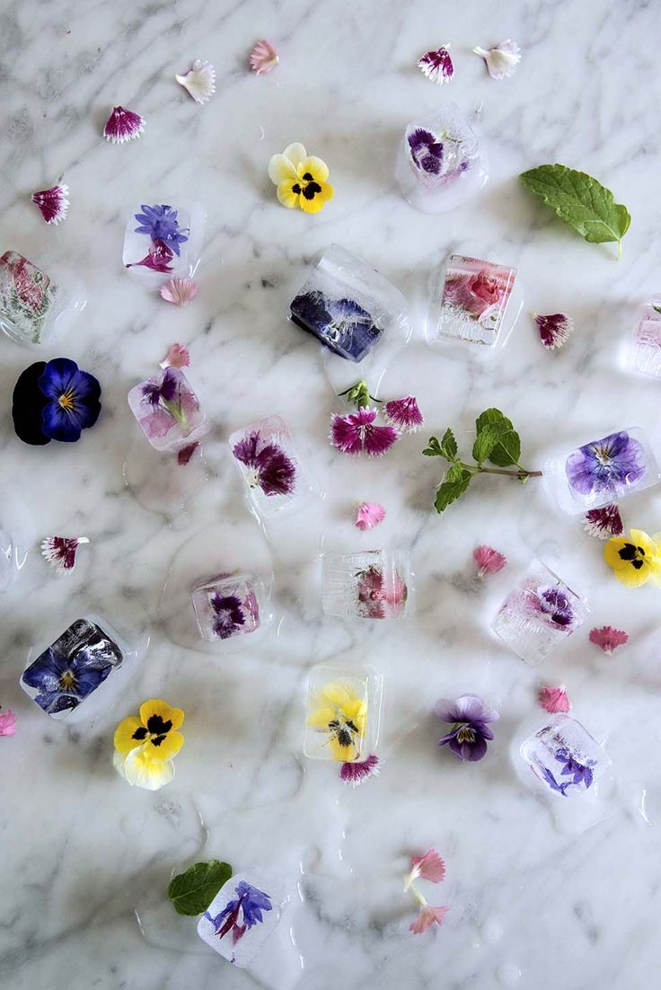 Frozen Cocktail Lollies and Fresh Flower Ice Cubes