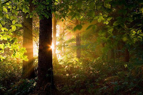 Sunrise Forest Yorkshire Dales England Photo Via Peaceof