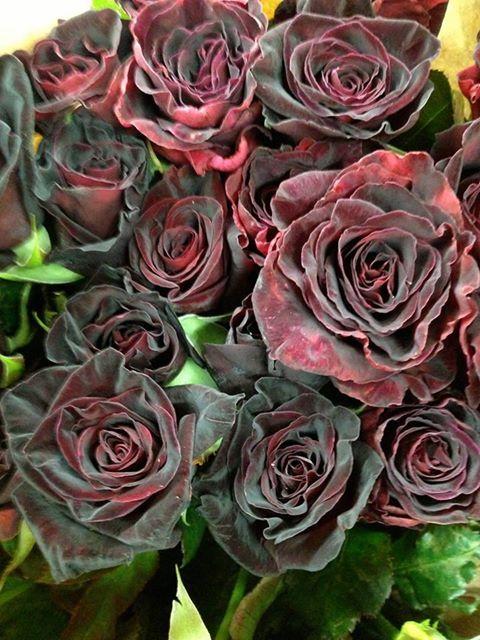 Roses from Halfeti, Turkey