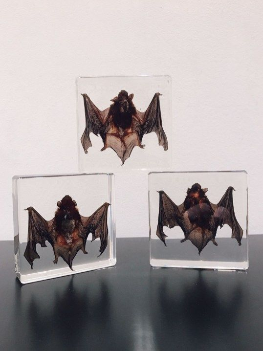 80 Dangerous Furniture For Witchy Apartment Decorating Decor Taxidermy Bat