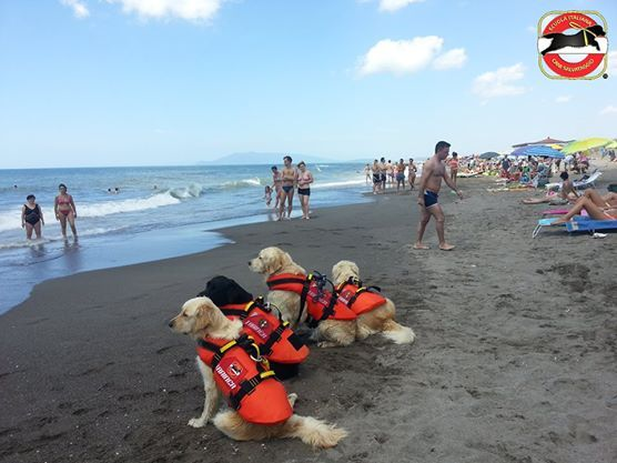 Baywatch, italian rescue dogs, SICS, cani da salvataggio, hero, heroic, dogs.  http://www.scuolacanisalvataggio.it http://novafoods.com/impegni-sociali.php http://www.trainer.eu/trainer-cani-eroi.php
