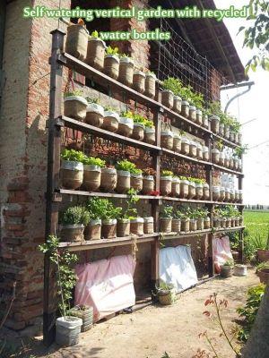 Auto irrigazione del giardino verticale con bottiglie d'acqua riciclate - vivere verde e frugale da soggetti scelti a caso