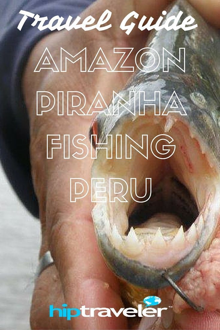 HIP Traveler| Travel Guide to  Amazon Piranha Fishing, Peru || Iquitos is in the Amazonas region of Peru. For travelers, Iquitos offers a vast selection of activities not found elsewhere in Peru, such as Amazon boat rides and great wildlife viewing