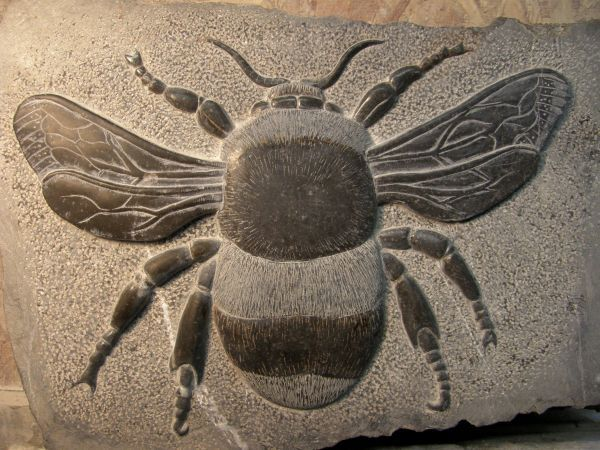 Best the insect sculptures statues statuettes