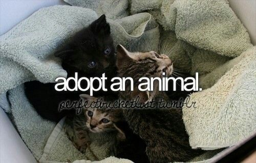 I have always wanted to save hurt and abused animals...and give them the care they need!!! ummm just one? nope im gonna adopt a lot more than that XD