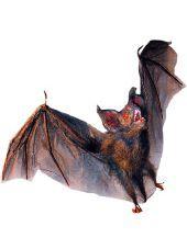 partycityi halloween flying halloween bat decoration party city