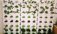 Minigarden - Innováció a kertészkedésben - zöld fal, konyhakert, függőleges kert, moduláris kert, fűszernövény, kitchen garden, green wall