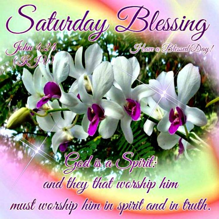 Saturday Blessing, John 4.24 - Have a Blessed Day! | Flowers + Bible ...