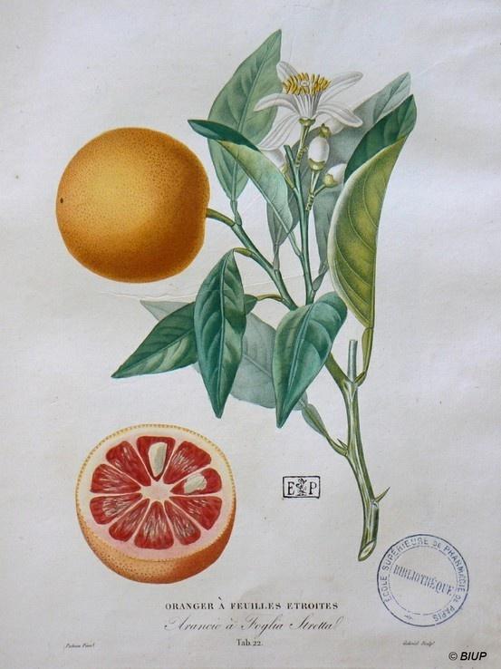 Burma Natural Foods Company
