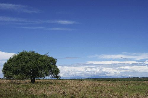 Baluran National Park, East of Java - Indonesia #Nature #Tree #Sky #Indonesia
