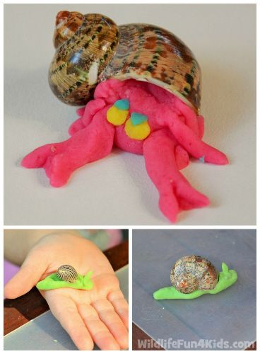 Great Activity for Sea Snails and Hermit Crabs in our Under the Sea Preschool theme