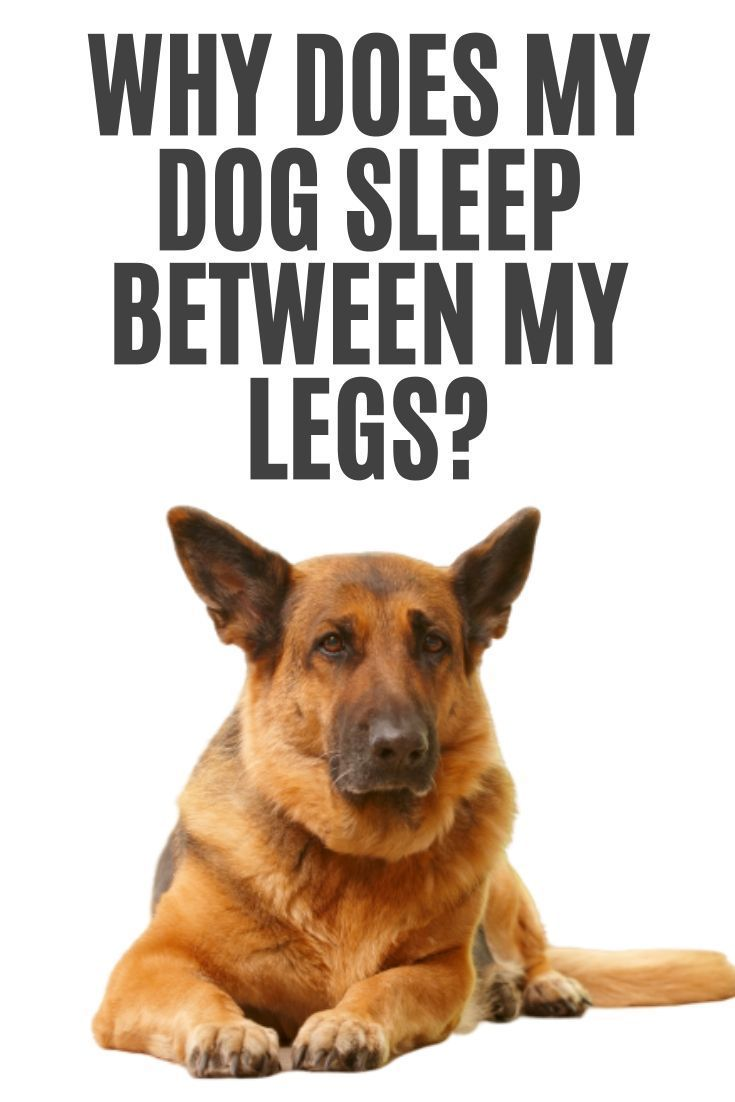 Funny Quotes About Dogs Sleeping
