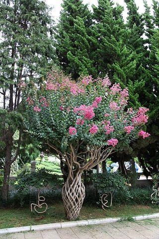 Дизайн двора ... - Цветочный форум