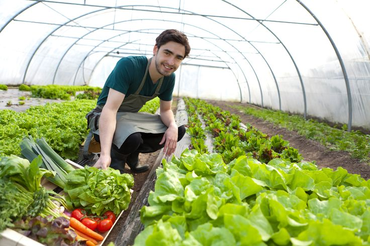 USDA Aims to Help Small Farmers Fund Organic Certification Costs