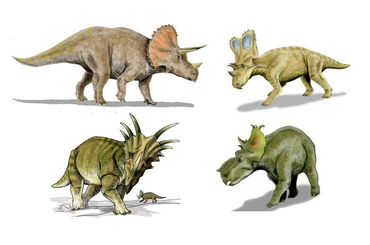 Triceratops Herbivorous Ceratopsid Dinosaur Coloring Page ...