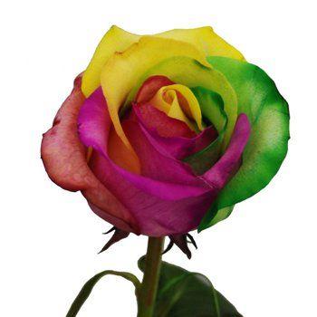 Rainbow Roses Amazing!Rose Amazing, Rose Custom, Colors Rose, Rainbows Rose, Rainbow Roses, Products, Gras Rose