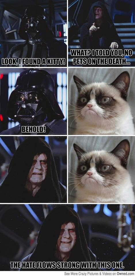 243 best f u n n y m e m e s images on pinterest funny animals no pets on the death star pic sciox Image collections
