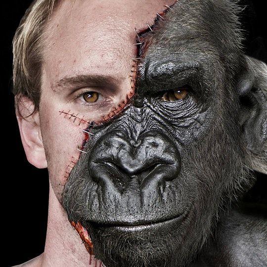 Evolution  by Josh Dykgraaf