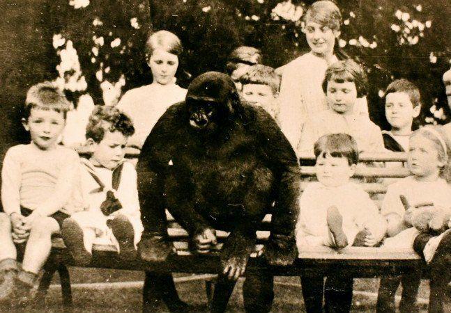 Parecia uma lenda urbana que sobrevivia no imaginário dos moradores de Uley, um pequeno vilarejo inglês: segundo dizem, um gorila teria vivido em meio à comunidade por volta de 1920. Agora, fotos comprovam que a história de John Daniel é verdadeira. O acervo foi encontrado por Margaret Groom, que escreveu um livro sobre o vilarejo. Ela conta que o gorila foi levado a Londres em 1917 por soldados franceses, que mataram os pais do animal no Gabão. Na capital inglesa, ele foi comprado por…