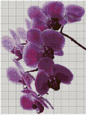 Orchidee Viola - Purple Orchids