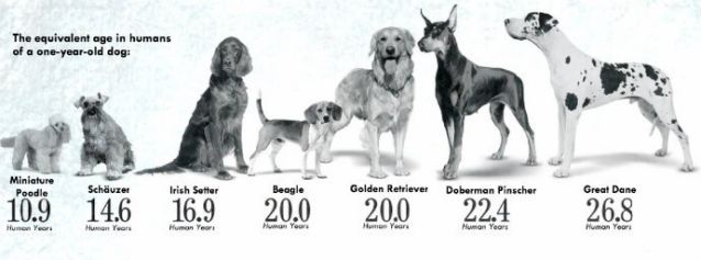 ¿Sabes cómo calcular la edad de tu perro?
