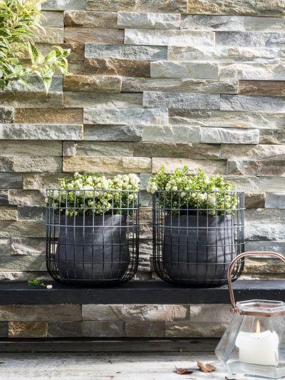 Parelbes. Wintergroen blad (mooi met wuifgras en klimop) Mannen en vrouwenplanten nodig voor bestruiving