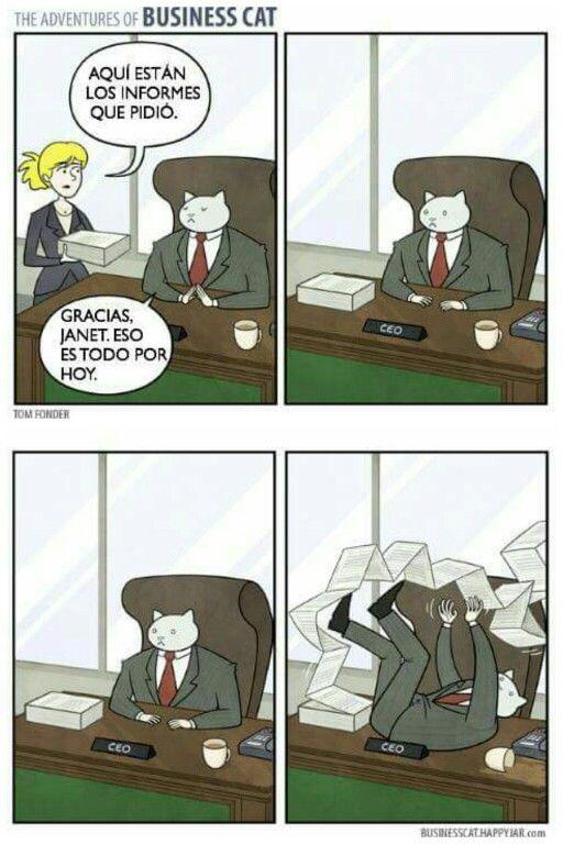 The Adventures of Business Cat #5 #gatos