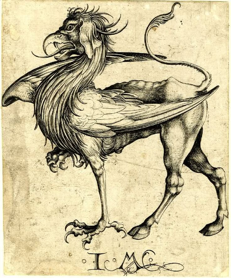 A fifteenth-/sixteenth-century etching of a griffin as imagined by Martin Schongauer. (British Museum)