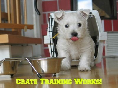 Crate training works because it fits with your puppy's natural desire not to mess where he sleeps.  Using a crate is the quickest, and easiest way to house-train your puppy.