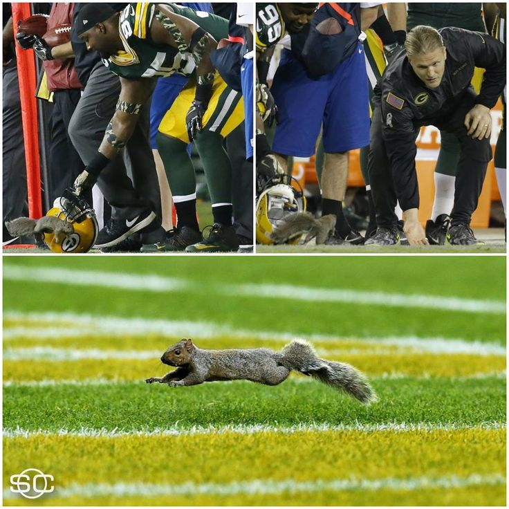 Best part of the Packer/Colts game, 11/6/2016, was the squirrel on the field!