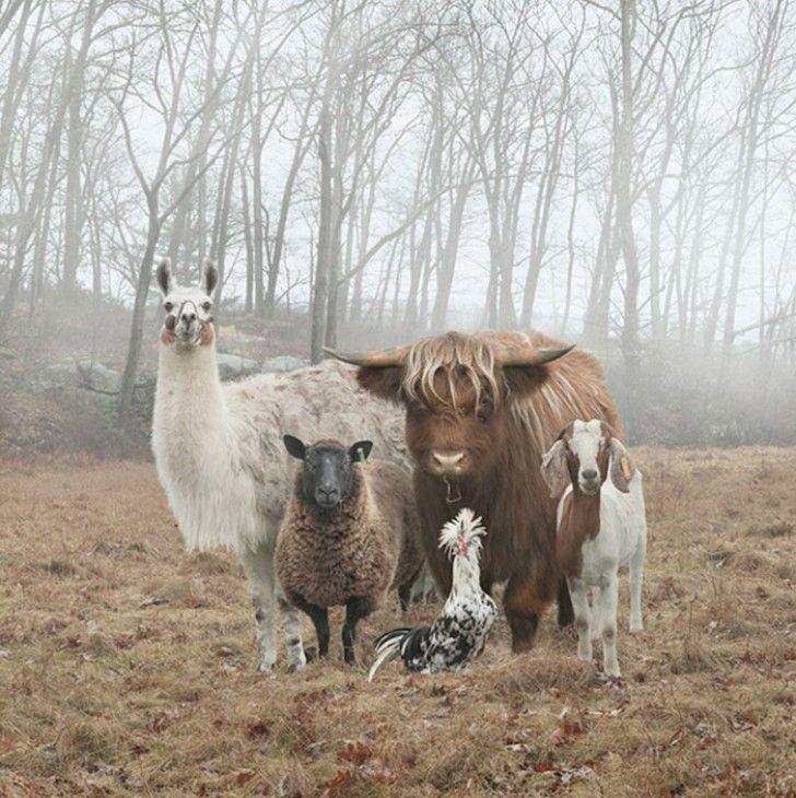 Animali In Posa Come Band Musicali: Gli Scatti Sono DA COPERTINA