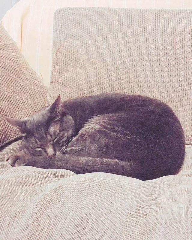 眠いみたいです💤  #ねこ#猫#ネコ#ねこ部 #ネコ部#猫部#猫好き#ネコ好き#ねこ好き#サバトラ#ねこのきもち #愛猫 #眠い#眠り猫#みんねこ #にゃんこ#にゃんすたぐらむ #ねこら部 #ねこあつめ #ねこのいる暮らし #猫バカ #フォロー#cat#cats#catsofinstagram #catstagram #ねこのいる暮らし