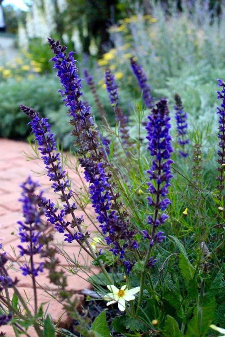 4113 best vrt patio images on pinterest terrace for Terrace garden plants