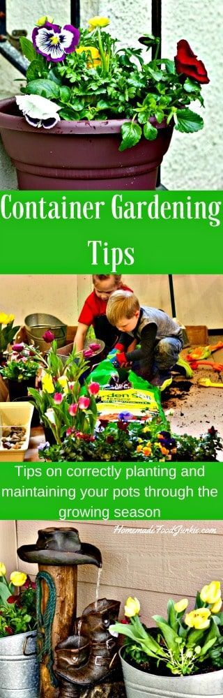 213 best Container Gardening images on Pinterest