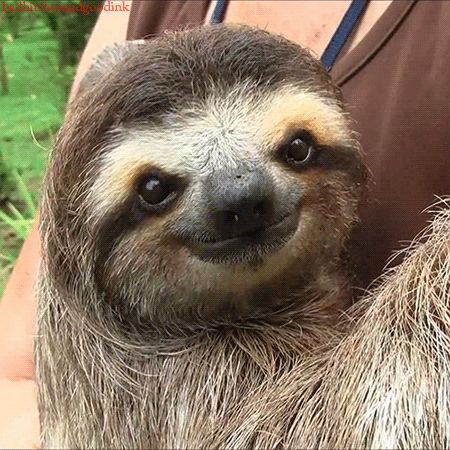 6 Different Types Of Sloths In The Rainforest With Pictures And Facts Cute Sloth Baby Sloth
