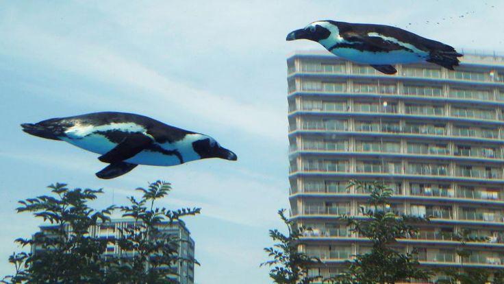 Diese Afrikanischen Pinguine scheinen zu fliegen. Sie schwimmen aber in einem Wassertank auf dem Dach des Sunshine-Aquariums in Tokio (Japan). | Bildquelle: dpa