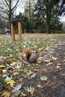 Ania mama Agnieszki: Park Śląski - karmimy wiewiórki