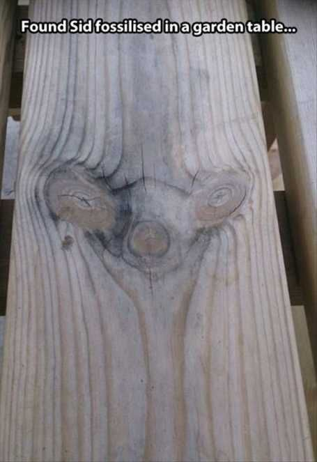 funny-looking-peice-of-wood