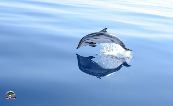 Baby Striped Dolphin #Dolphin | Dolphins Pic & Stuff ...