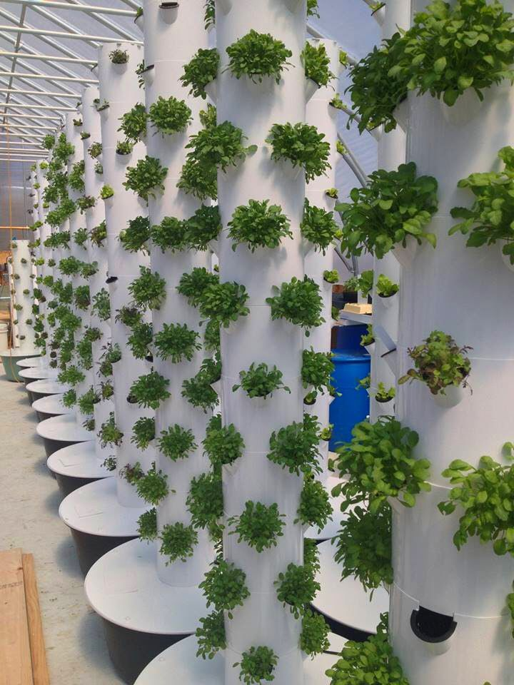 211 best Aeroponic Gardens Sanura Moon Lifestyle images on