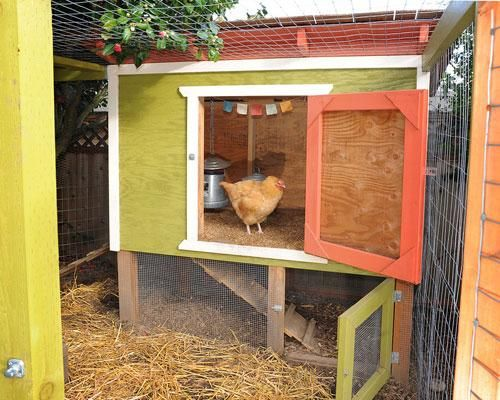 A large door on the front allows for easy cleaning and egg collecting while a smaller side door leads to a ramp that lets the chickens come and go as they please. They added a well-protected space beneath the coop that lets the chickens get fresh air but that keeps them safe from harm whenever they need to be left alone for an extended period of time.