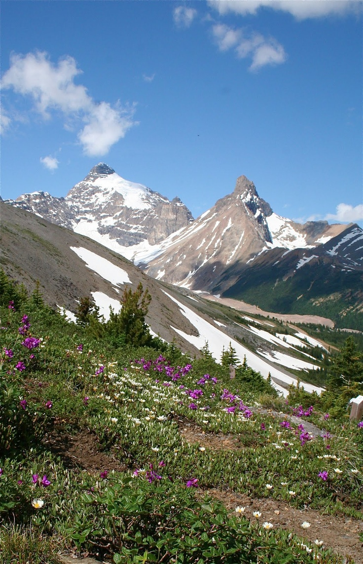 Best Hikes In Canada Where To Find Them: 76 Best Best Hikes In The Canadian Rockies Images On