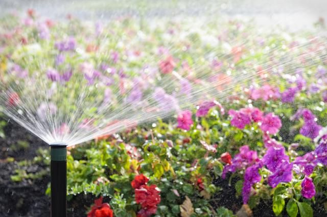 Tricks for Watering Plants While on Vacation