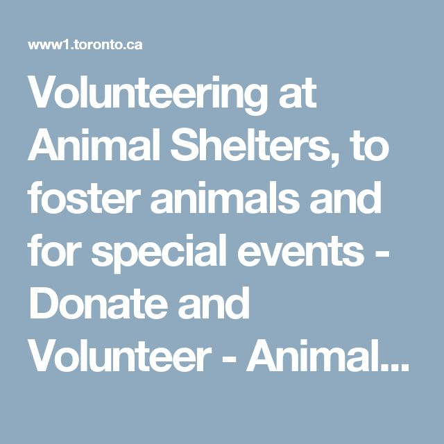 Volunteering at Animal Shelters, to foster animals and for special events - Donate and Volunteer - Animal Services | City of Toronto