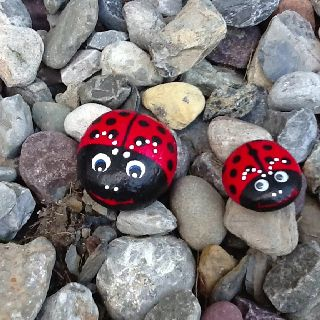 painted ladybug rocks 14 best images about painted rocks bugs on 2597