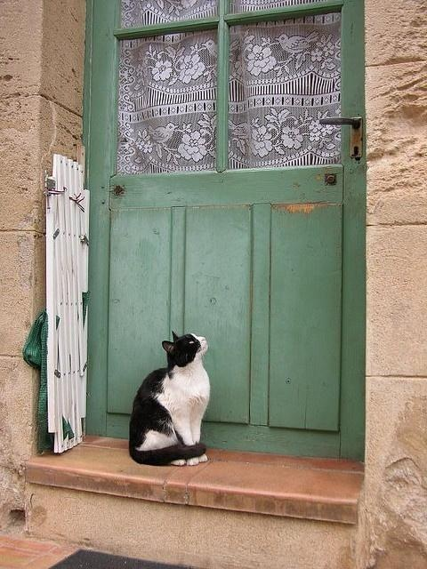 beautiful cat. beautiful door. #cottage #Landhaus ♡♥♡
